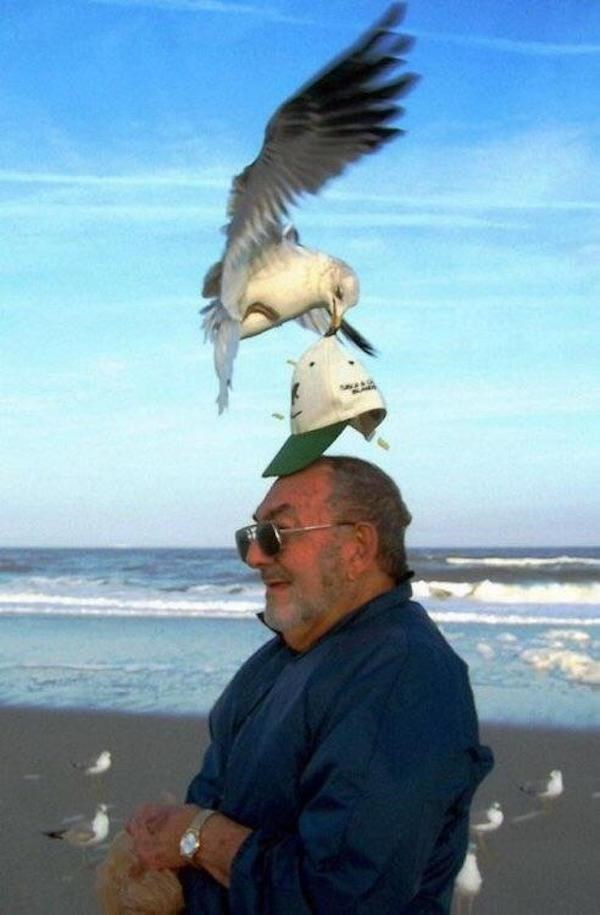 Perfect timed photo of bird on the beach stealin a man's hat.