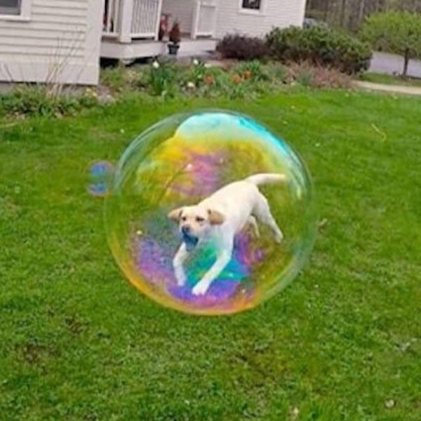 perfect timing photo that makes it look like running dog is stuck inside a bubble.
