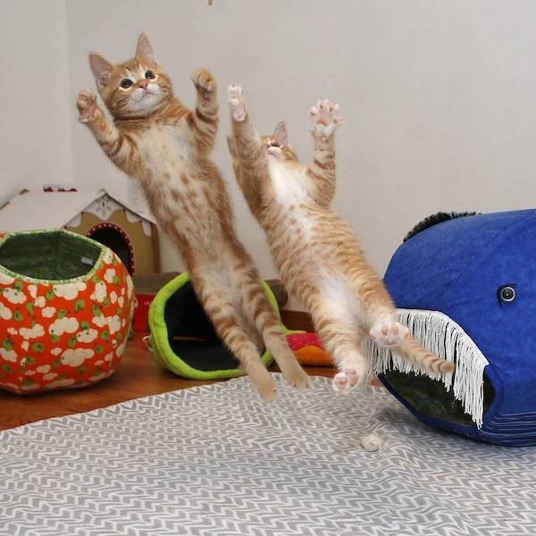 Perfect timing photo of cats falling backwards in midair as if they are about to catch something.