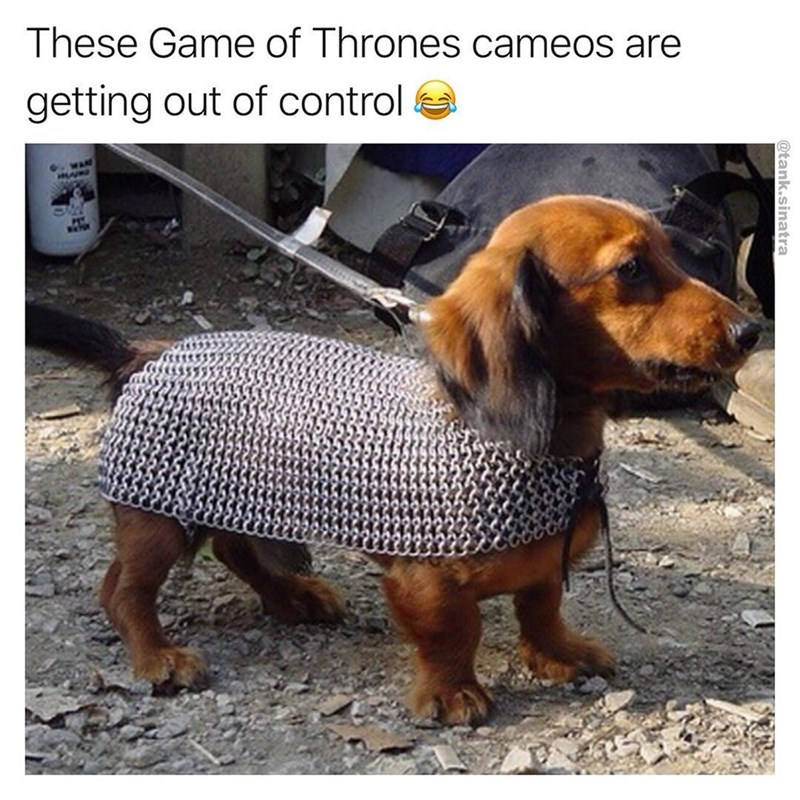 funny meme of dog in game of thrones chainmail.