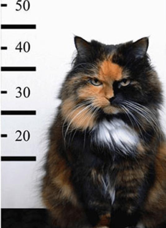 Cat - -50 -40 - 30 - 20