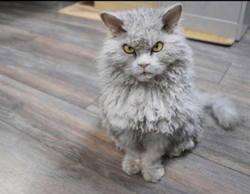 Cat - 9
