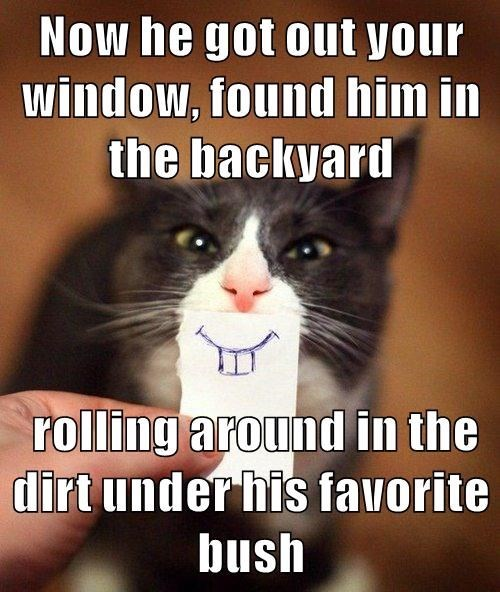 Photo caption - Now he got out your window, found him in the backyard rolling around in the dirt under his favorite bush