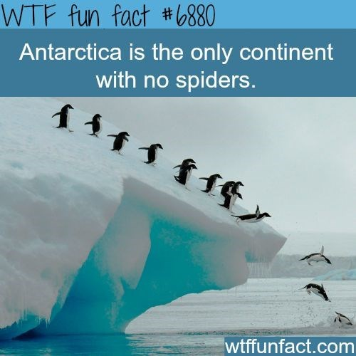 Flightless bird - WTF fun fact #6880 Antarctica is the only continent with no spiders. wtffunfact.com