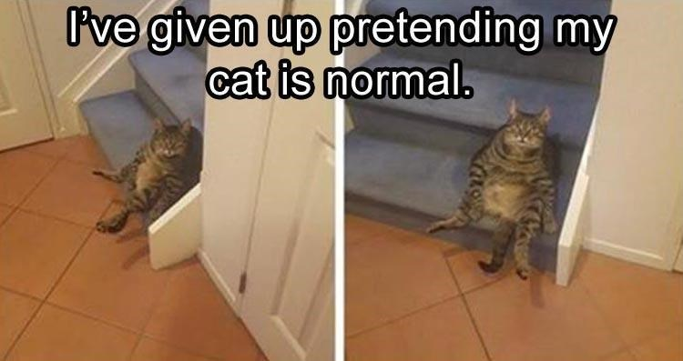 Caturday meme of a cat sitting on a step like a human