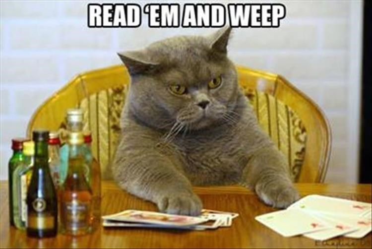 Caturday meme of a cat winning a card game