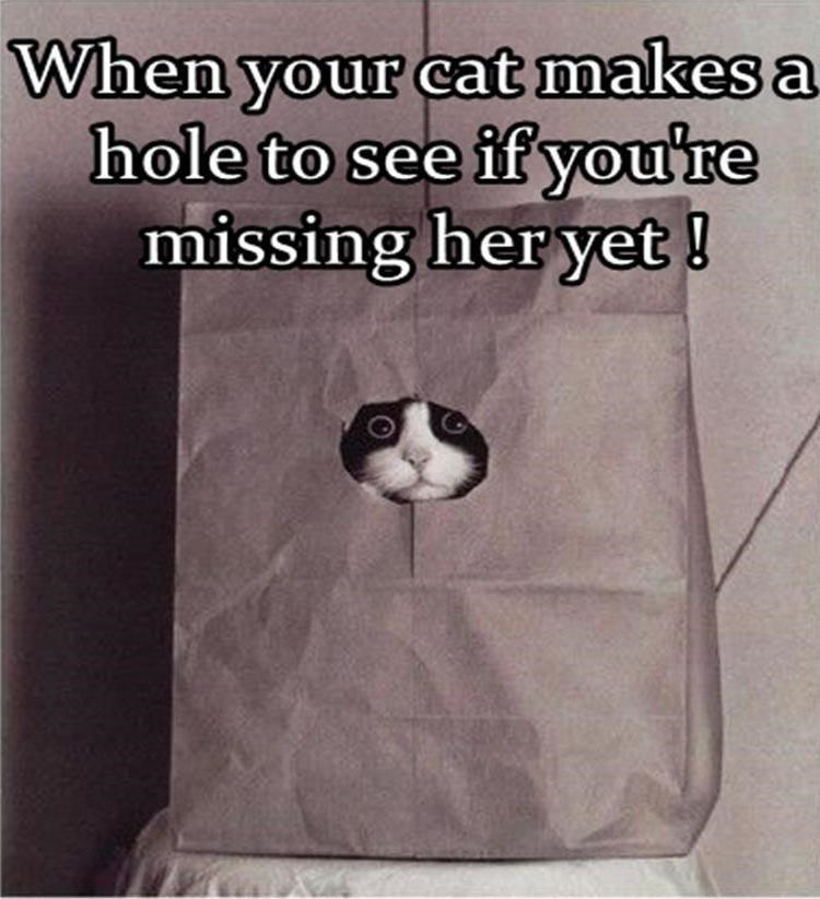 Caturday meme of a cat peeking out of a paper bag to check on you