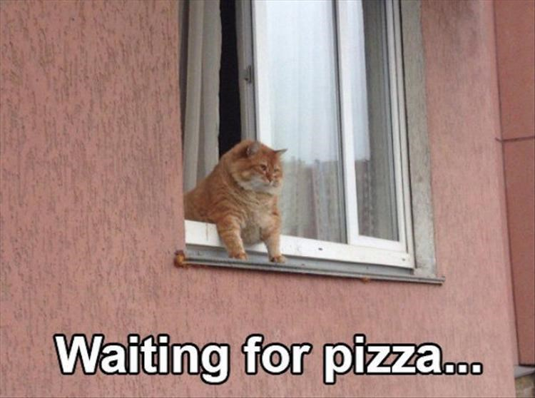 Caturday meme about waiting for a food delivery