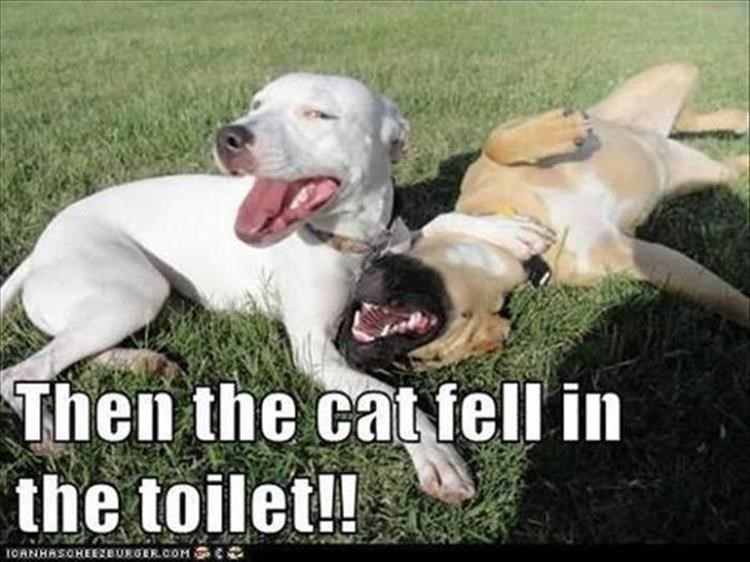 Caturday meme of dogs making fun of a cat