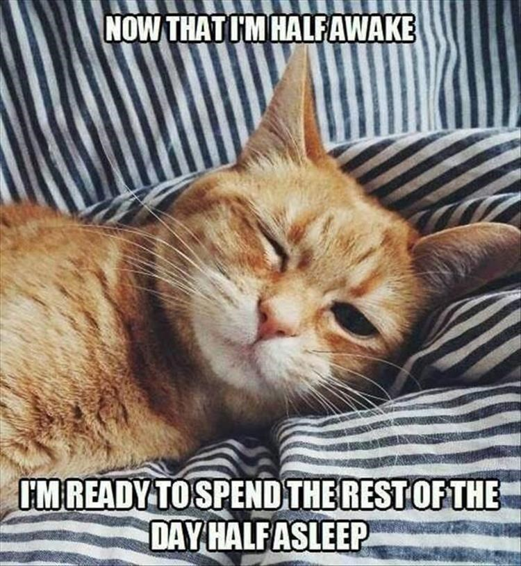Caturday meme about cats sleeping the whole day