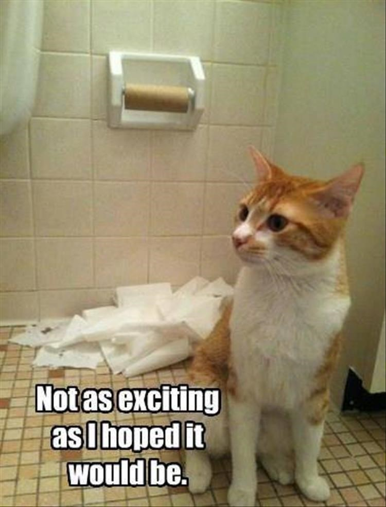 Caturday meme of a cat underwhelmed after destroying toilet paper roll