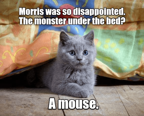 a cute meme with a cute grey kitten