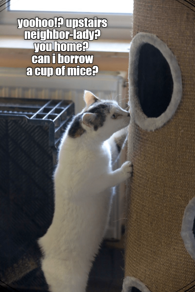 a meme of a cat asking his neighbor for a cup of mice
