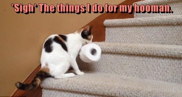 a meme of a cat bring a roll of toilet paper up the stairs