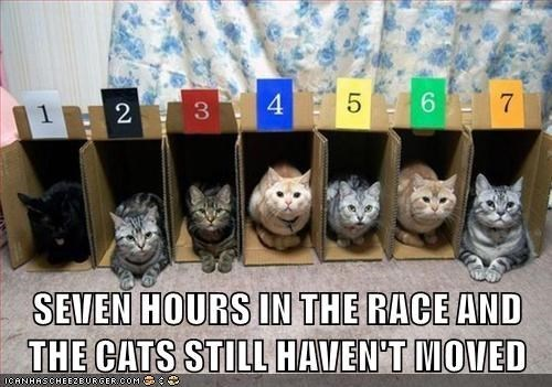 a photo of a few cats in boxes as a starting point and not moving