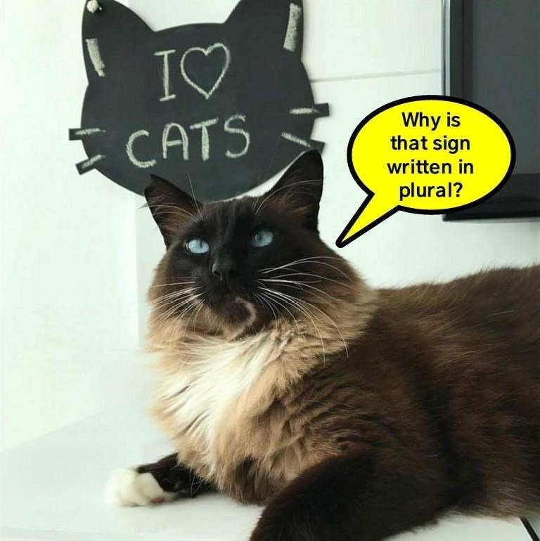 a funny meme of a cat asking why the sign says more than 1 cat