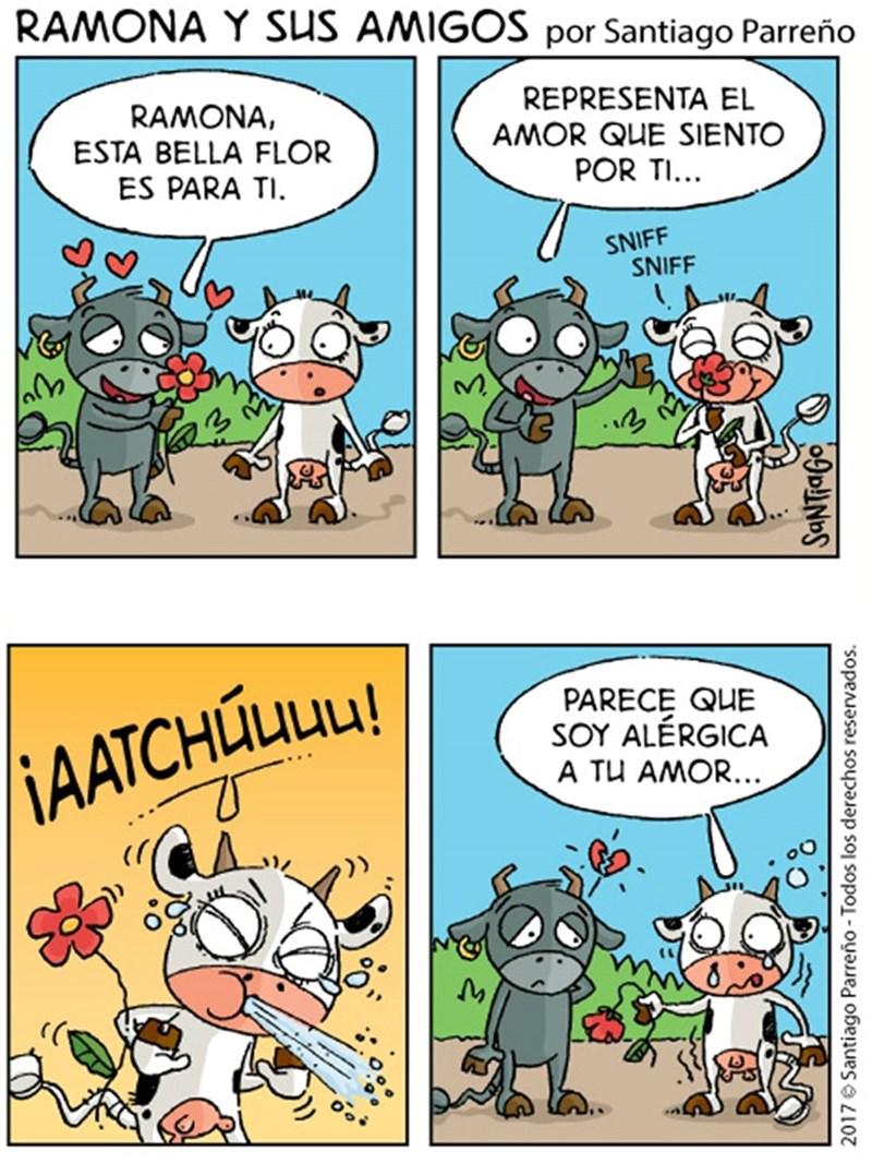 toro le da flores a su vaca pero ella es alergica a ellas