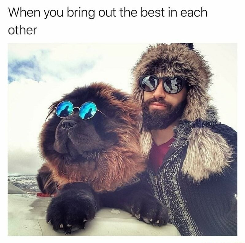 dog and man that bring out the best in each other.