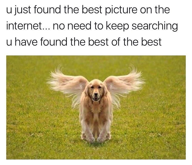 dog with angel wings on grass - meme of the best picture on the internet said it twice