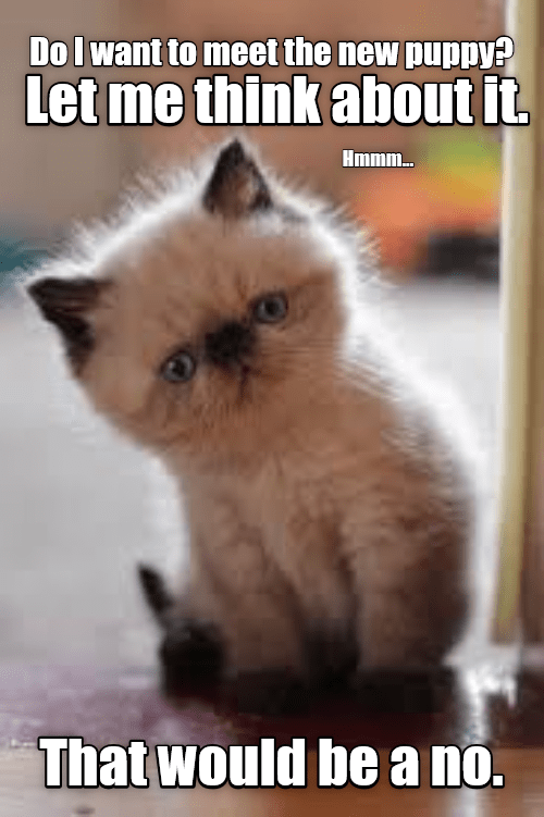 Nope Lolcats Lol Cat Memes Funny Cats Funny Cat Pictures