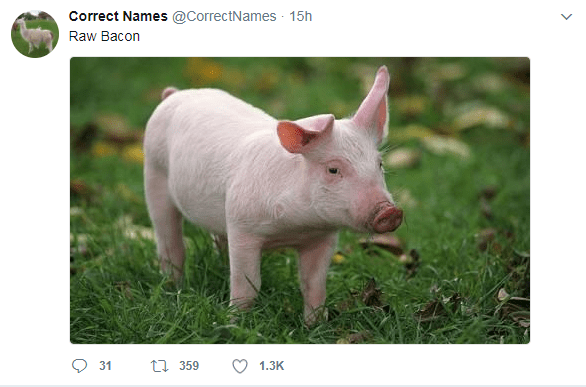 Domestic pig - Correct Names @CorrectNames 15h Raw Bacon 359 31 1.3K