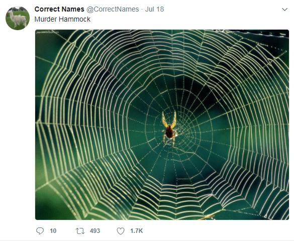 Spider web - Correct Names @CorrectNames Jul 18 Murder Hammock t 493 10 1.7K