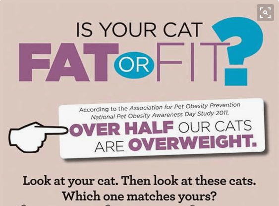 Infographic about how like half of cats are overweight