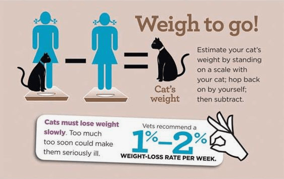 Common tips for how to help your cat loose weight