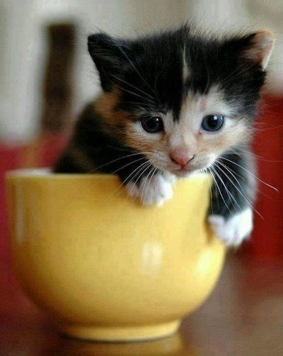 Cute kitten in a coffee mug