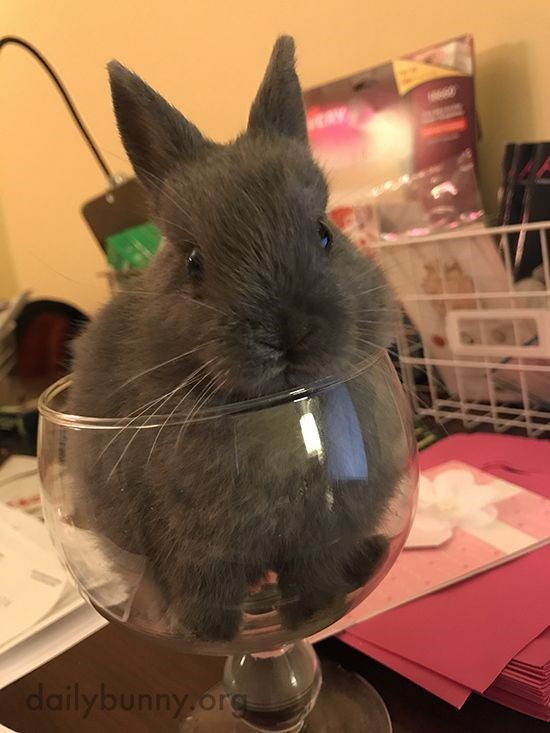 Cute bunny rabbit in a glass