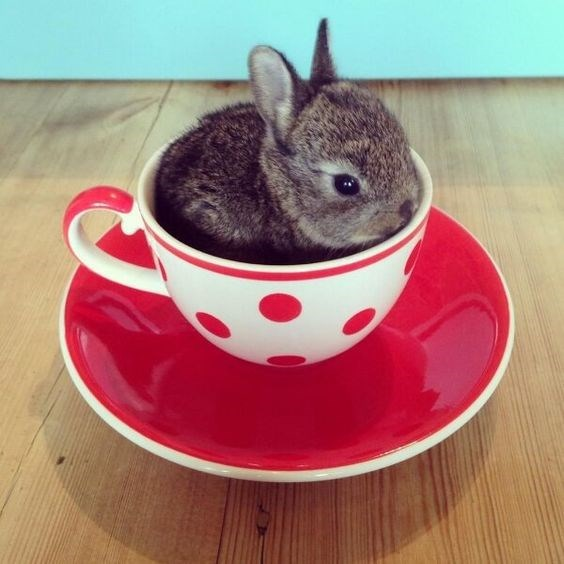 Cute and tiny rabbit in a coffee cup