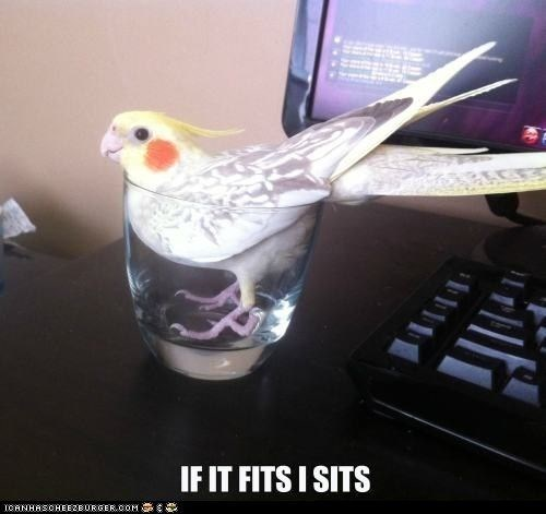 Bird if it fits it sits meme in a glass tumbler