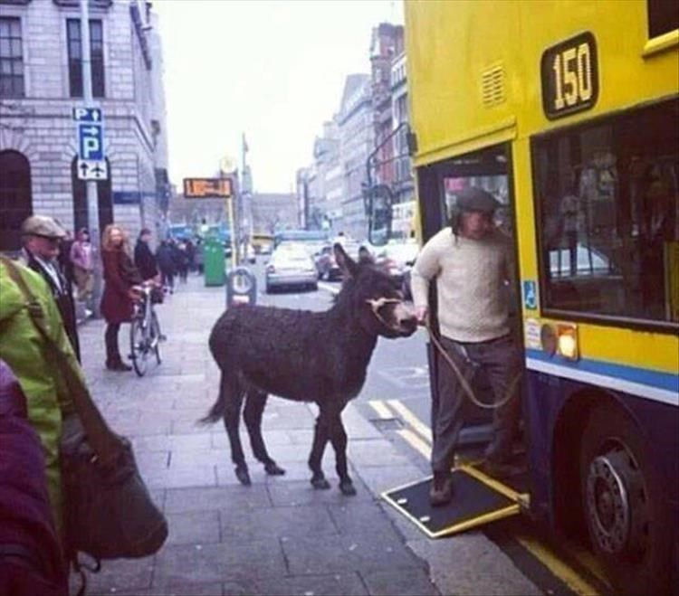 Man boarding a bus with a donkey