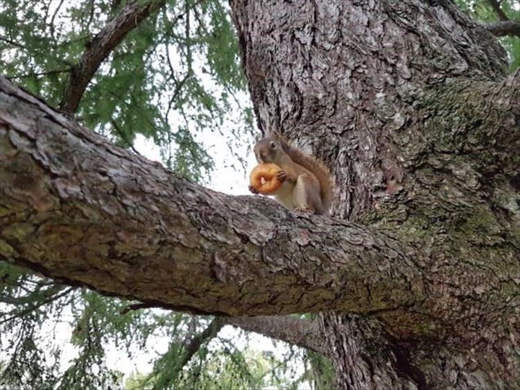 Monkey in a tree enjoying a donut
