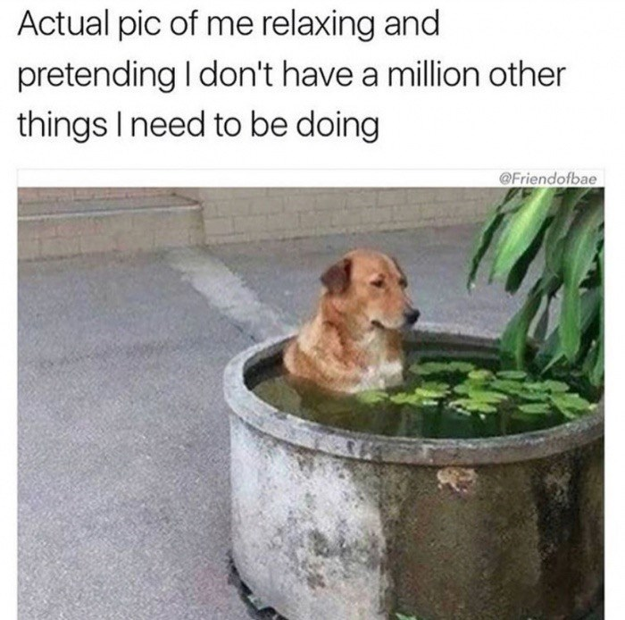 Meme about relaxing and pretending there are not a million other things you need to be doing, pic of dog soaking in a tub