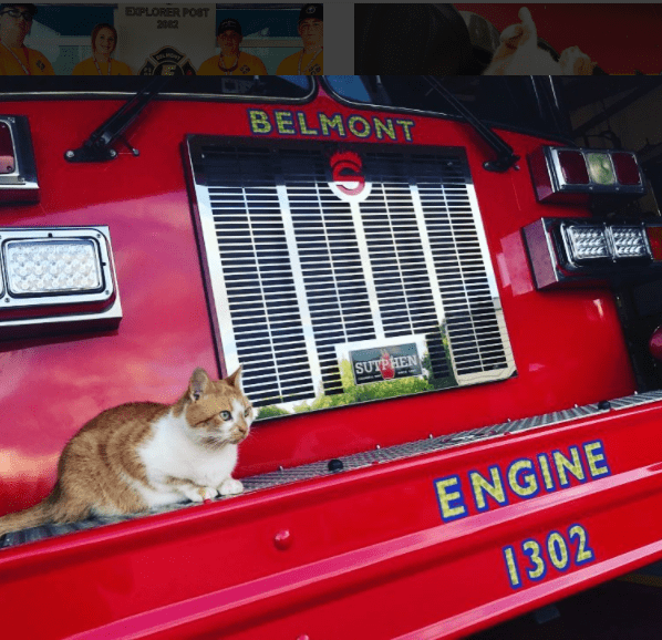 Flame the Arson Cat sitting on Firetruck Engine 1302 from Belmont