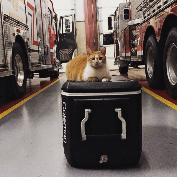 Flame at Belmont fire department Greenville county sitting on box full of gear.