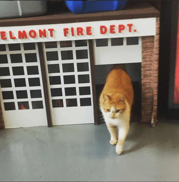 Flame the cat even has a mini fire station cat house