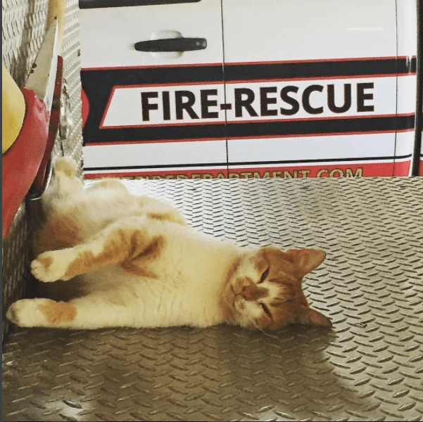Cat passed out on the floor of the fire truck