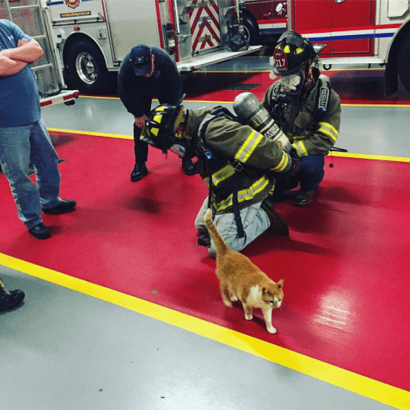 Flame the cat walking by some firefighters as they unload their gear after fighting a fire