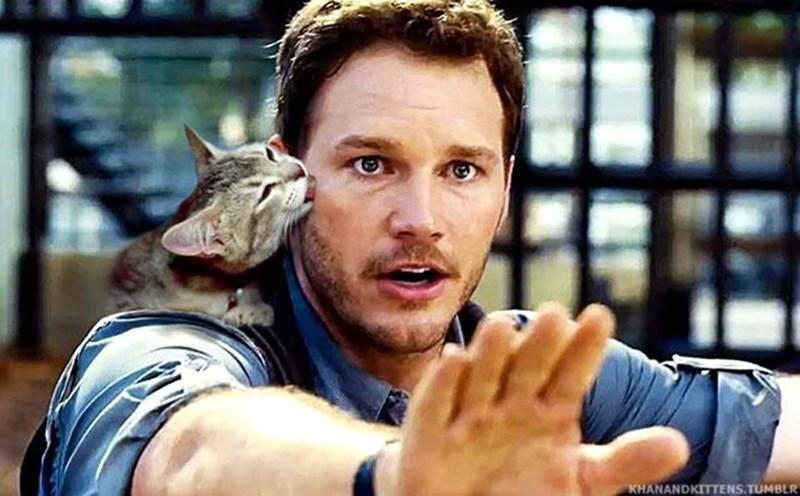 cat licking mans face in Jurassic World movie