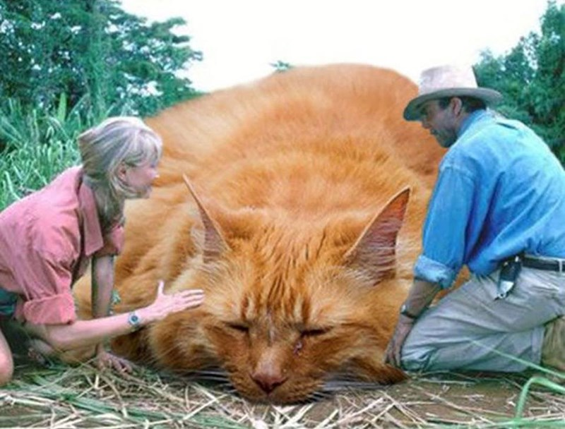 Jurassic Park scene with Triceratops replaced by fat cat