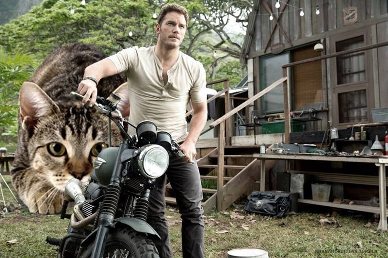 Dinosaur replaced by giant kitten chasing the man on the motorcycle