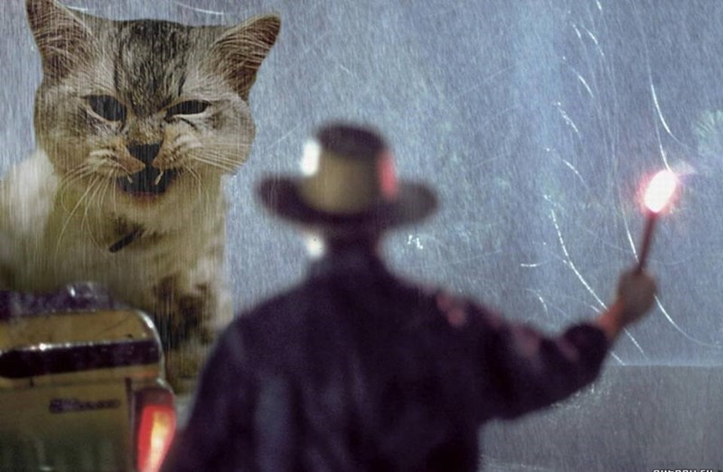 Cat showing his fangs replaced the T-rex in the flare scene in Jurassic park