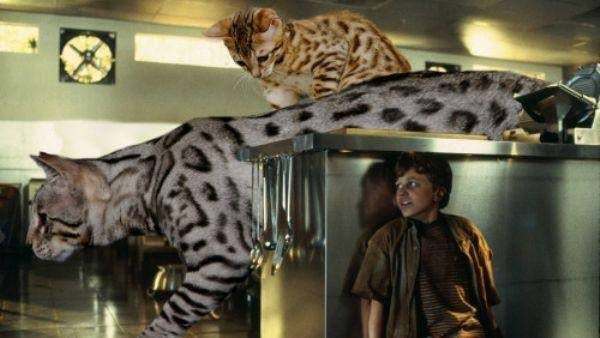 Cats in the kitchen Jurassic park scene