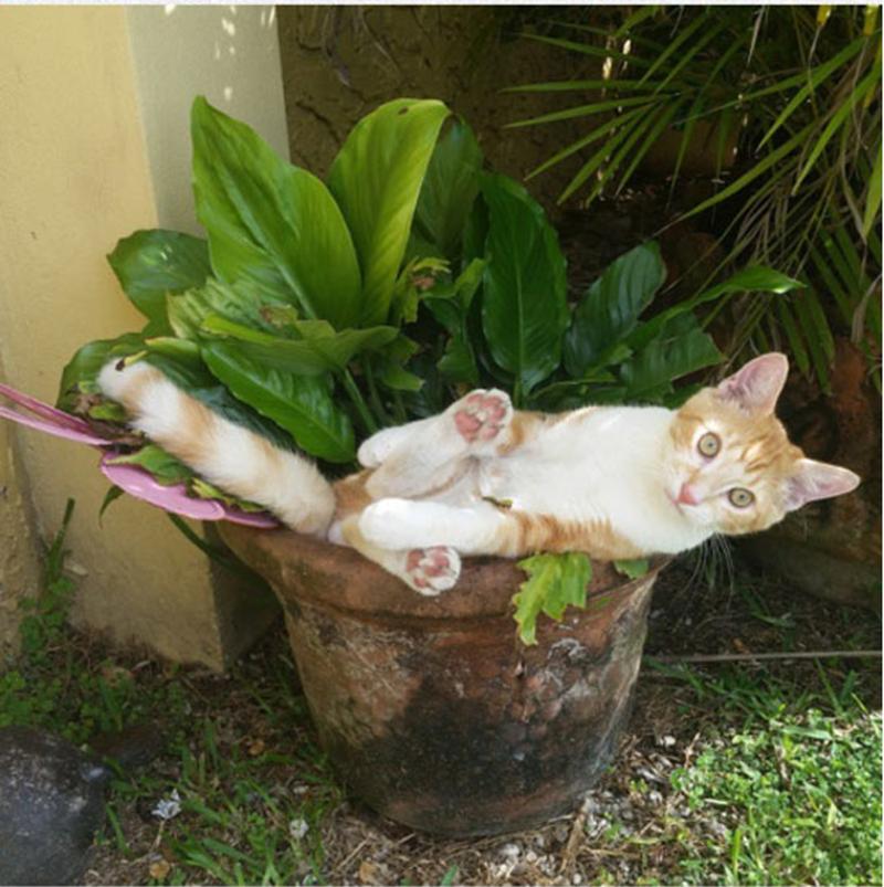 Orange cat sleeping in a flower pot