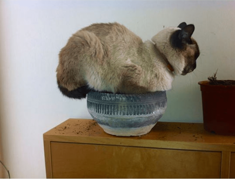 Cat in a bowl that does not fit, but still sits