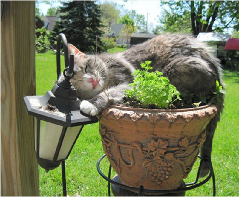 Cat out doors on a flower pot cozying up to the lamp post