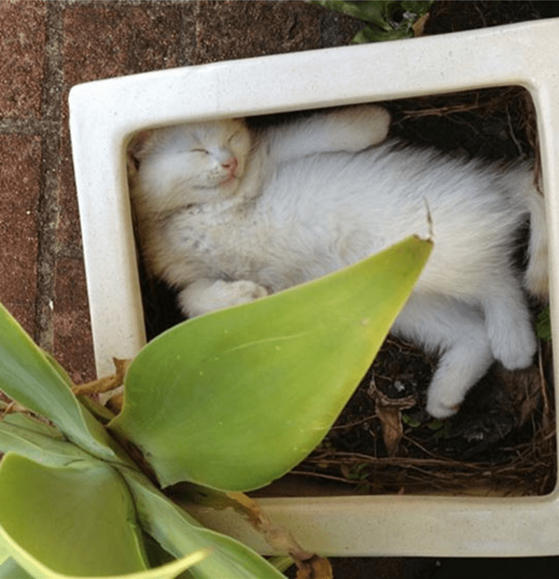 Cat passed out in a large flower pot