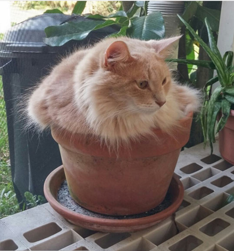 Cat fitting perfectly into a flower pot
